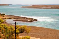 在蓬塔领唱者的象海豹在PenÃnsula Valdés 免版税库存照片