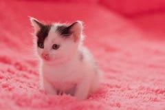 在蓬松格子花呢披肩的一只小,逗人喜爱的小猫 库存图片