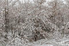 在蓬松雪的美丽的树 免版税库存照片