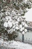在蓬松雪的美丽的树 免版税图库摄影