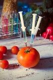 在蕃茄的三个注射器 概念食物基因上修改了 免版税库存图片