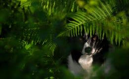 在蕨下的狗 库存照片