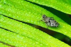 在蕨的蝗虫 图库摄影