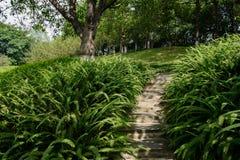 在蕨的被遮蔽的山坡石头楼梯在晴天 免版税库存照片