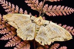 在蕨的飞蛾 免版税库存照片