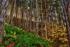 在蕨谷的太阳焕发 免版税库存照片