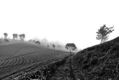 在薄雾中间 免版税库存照片