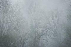在薄雾掩藏的雾的鬼的树 免版税库存图片