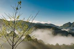 在薄雾的太阳上升中央谷地 免版税库存照片