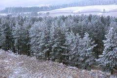 在薄雾的斯诺伊冷杉木在早晨山 免版税库存图片