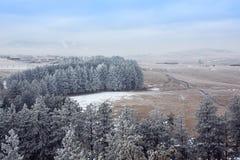 在薄雾的斯诺伊树在早晨山 免版税库存照片