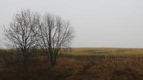 在薄雾的树剪影 免版税库存照片