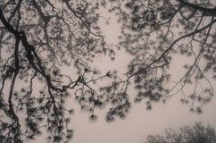 在薄雾的树枝 库存照片