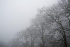 在薄雾的树 图库摄影