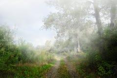 在薄雾的森林公路。 库存图片