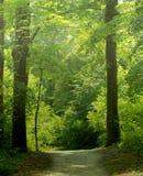 在薄雾的森林线索 免版税库存照片