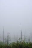 在薄雾的死的树 免版税库存图片