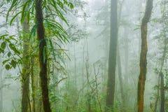 在薄雾的热带雨林 库存图片