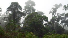 在薄雾的热带Dipterocarp Rainfprest 股票视频