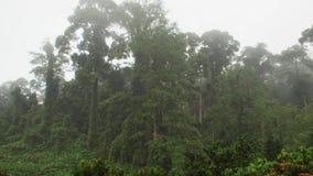 在薄雾的热带Dipterocarp Rainfprest 股票录像