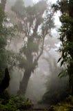 在薄雾的雨林 免版税库存照片
