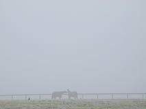 在薄雾的马 库存图片