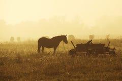 在薄雾的马 免版税库存照片