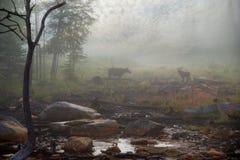 在薄雾的麋 免版税库存照片