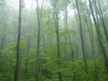 在薄雾的结构树 库存图片