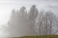 在薄雾的结构树 免版税库存照片