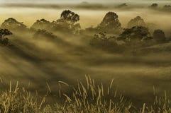 在薄雾的结构树 免版税库存图片