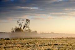 在薄雾盖的草甸 免版税库存图片