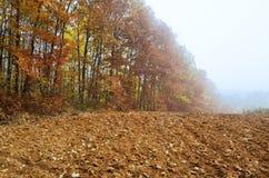 在薄雾覆盖的森林的边缘 免版税库存照片