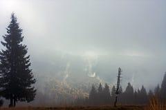 在薄雾, Gorce的山在波兰 免版税库存图片