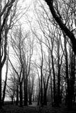 在薄雾-苏格兰的小灌木林 免版税库存图片
