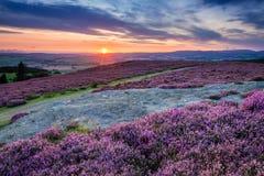 在薛维尔种羊小山和Rothbury石南花的日落 库存图片