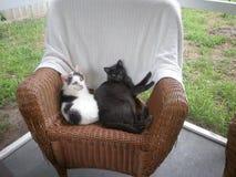 在藤条椅子的两只猫在门廊 图库摄影