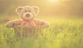 在藤条篮子的可爱的棕色玩具熊在绿色领域与len 库存图片