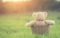 在藤条篮子的可爱的棕色玩具熊在绿色领域与len 库存照片