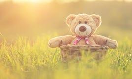 在藤条篮子的可爱的棕色玩具熊在绿色领域与len 免版税库存照片