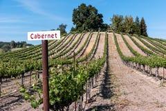 在藤的加伯奈葡萄酒 免版税库存图片