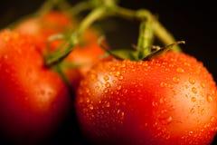 在藤的新鲜的被清洗的蕃茄 库存图片