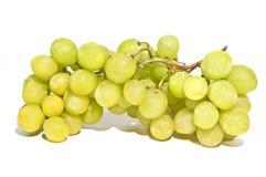 在藤的甜绿色无核的葡萄 库存照片