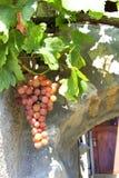 在藤的葡萄在一个老房子前面 库存图片