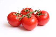 在藤2的四个蕃茄 库存图片