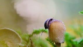 在蘑菇的一只潮虫 影视素材