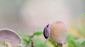 在蘑菇的一只潮虫 股票录像