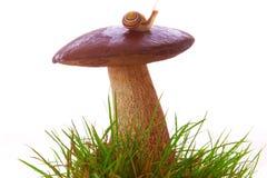 在蘑菇的一只蜗牛。 库存图片