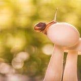 在蘑菇的小蜗牛 库存图片