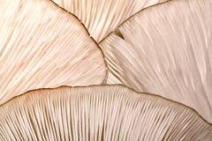 在蘑菇的样式 库存图片